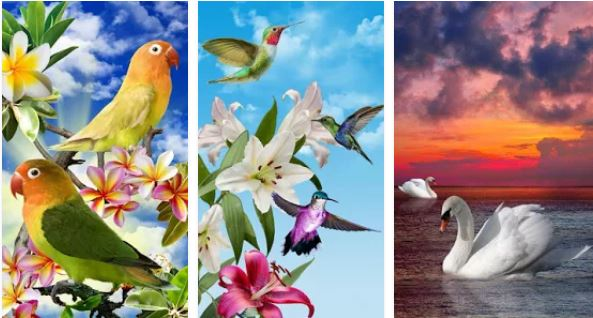 Burung hidup wallpaper